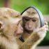 パートナー選びに役立つ?類人猿診断